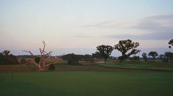 The approach is a full carry over the marsh and the 14th green is framed by the two oak trees on the right.