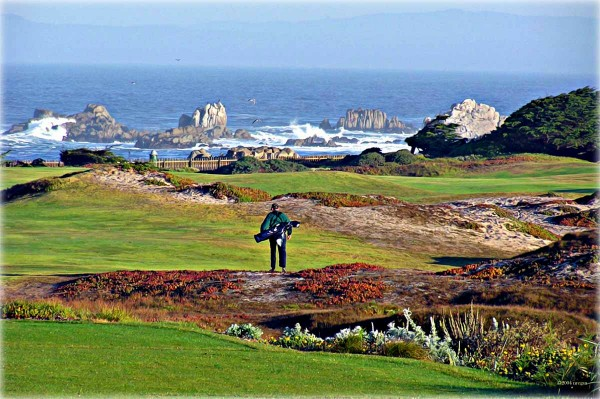 No chance this golfer wishes he was anywhere else other than walking down the 12th fairway at Pacific Grove.