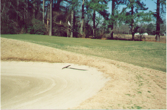 The original greens at Pine Crest are difficult to hit as they are pushed-up and slope away on all sides.