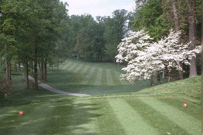 This shot is from the forward tee. A shot from the championship tee is through a much longer chute of trees.