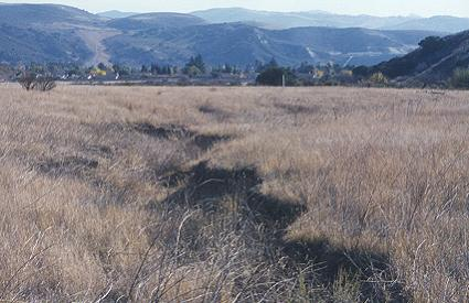 The Moorpark property is full of interest; the first green will be near the stake.