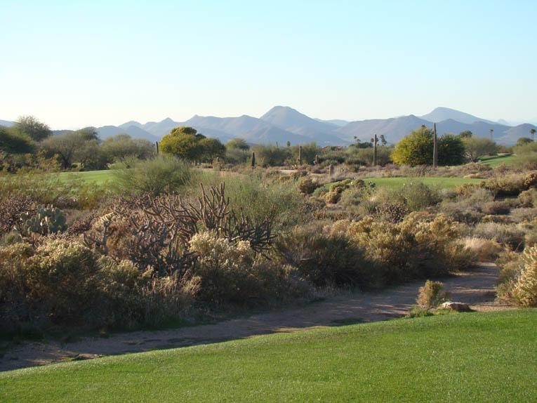 The desert broom, staghorn, saguaro, creosote bush, turpentine bush, palo verde and mesquite seen above provide a rich and varied texture to a game of golf at Desert Forest. Note the absence of all non-indigenous plant life.