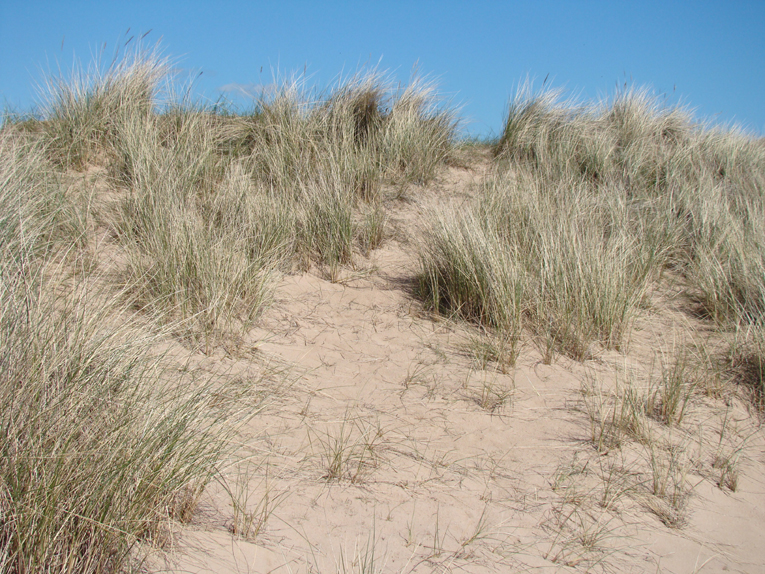 Don't ask how this perspective from the right dunes came to be taken!